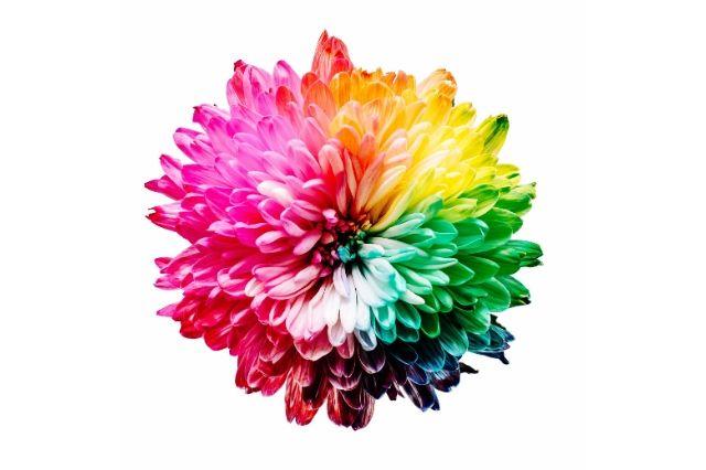Blume in Regenbogenfarben