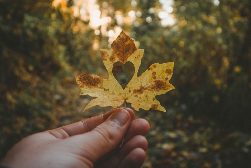 Jemand hält im Wald ein Ahorn Blatt mit einem ausgeschnittenen Herz in der Mitte hoch.